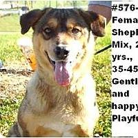 Adopt A Pet :: # 576-11 - CRITICAL! - Zanesville, OH