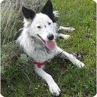 Adopt A Pet :: Keene - Glenrock, WY