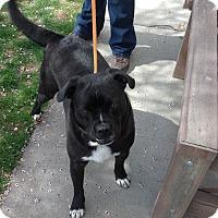 Adopt A Pet :: Richie - Meridian, ID