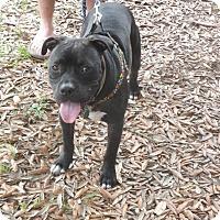 Adopt A Pet :: Oscar - Pensacola, FL
