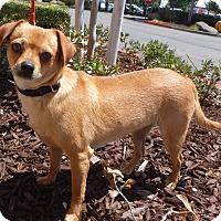 Adopt A Pet :: Gretchen - Modesto, CA