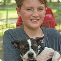 Adopt A Pet :: Milly - Daleville, AL