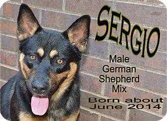 German Shepherd Dog Mix Dog for adoption in Richmond, Missouri - Sergio