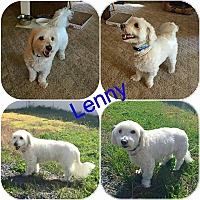 Adopt A Pet :: Lenny - ROME, NY