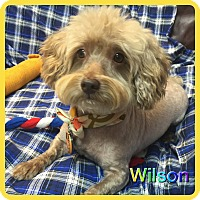Adopt A Pet :: Wilson - Hollywood, FL