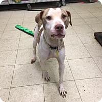 Adopt A Pet :: Frisco - Cleveland, OH
