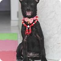 Adopt A Pet :: Fantasy Joy - Seattle, WA