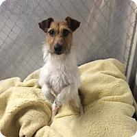 Adopt A Pet :: Tahoe - Willington, CT