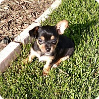 Adopt A Pet :: Charlie - Richmond, MI