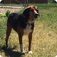 Adopt A Pet :: Gizmo - Buffalo, WY