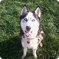 Adopt A Pet :: Zorro - Harvard, IL
