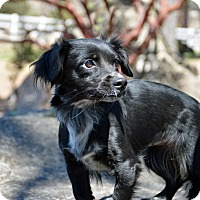 Adopt A Pet :: Fajita - Mountain Center, CA