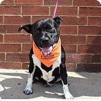 Adopt A Pet :: Missy Elliott - Mooresville, NC