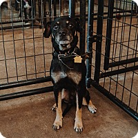 Adopt A Pet :: Mumbles - Apache Junction, AZ