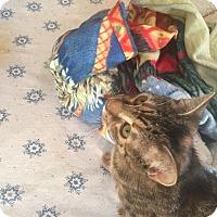 Adopt A Pet :: Gremlin - Encinitas, CA