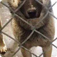 Adopt A Pet :: Satin - Oswego, IL