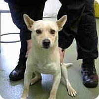 Adopt A Pet :: URGENT 3/1 @ Devore - San Bernardino, CA