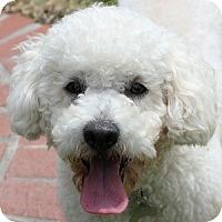 Adopt A Pet :: Devin - La Costa, CA
