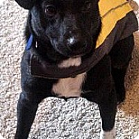 Adopt A Pet :: Thor- Adoption Pending - Hilliard, OH