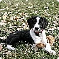 Adopt A Pet :: Telly - Alliance, NE