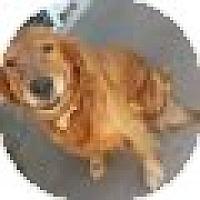 Adopt A Pet :: Gracie - Denver, CO