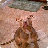 Adopt A Pet :: Avery,she has loyal eyes - Sacramento, CA