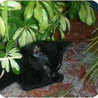 Adopt A Pet :: Panther - Bonita Springs, FL