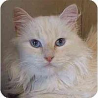 Adopt A Pet :: Crysta - Davis, CA