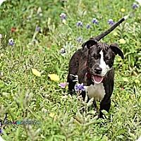 Adopt A Pet :: Eros - Houston, TX