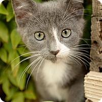 Adopt A Pet :: JennyLind - North Highlands, CA
