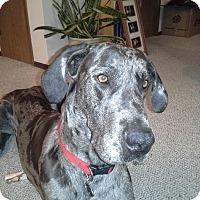 Adopt A Pet :: Odin - Egremont, AB