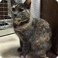 Adopt A Pet :: Autumn - Williamston, MI