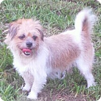 Adopt A Pet :: MINDY - Terra Ceia, FL