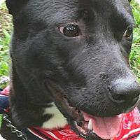 Adopt A Pet :: Hailey - St Petersburg, FL