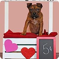 Adopt A Pet :: Sugar - Waldorf, MD