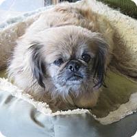 Adopt A Pet :: Betsy - Oakdale, TN