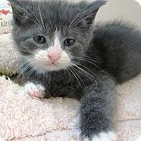 Adopt A Pet :: kitten #1 - Lebanon, PA