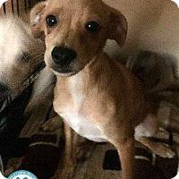 Adopt A Pet :: Alvin - Kimberton, PA