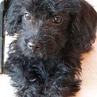 Adopt A Pet :: Dorothy - Tucson, AZ