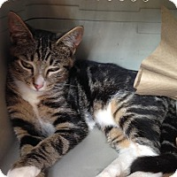 Adopt A Pet :: Bandit - East Brunswick, NJ