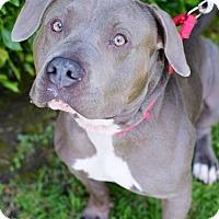 Adopt A Pet :: Jed - Santa Monica, CA
