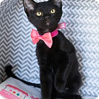 Adopt A Pet :: Licorice - Montclair, CA