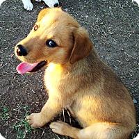 Adopt A Pet :: Tater - Waller, TX