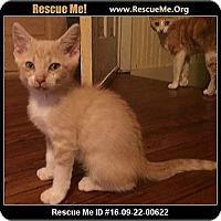 Adopt A Pet :: Stewart - Waldorf, MD