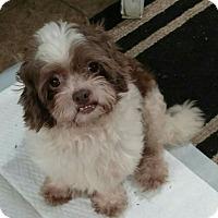 Adopt A Pet :: Barkley - Mary Esther, FL