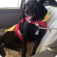 Adopt A Pet :: Zorrie - Staunton, VA