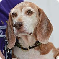 Adopt A Pet :: Althea Hughes - Waldorf, MD