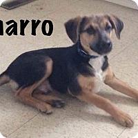 Adopt A Pet :: Charro - Calgary, AB