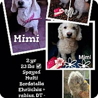 Adopt A Pet :: Mimi - Denver, CO
