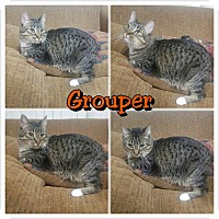 Adopt A Pet :: Grouper - Garden City, MI
